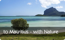 Mauritius Luxury Solo Holiday Destination